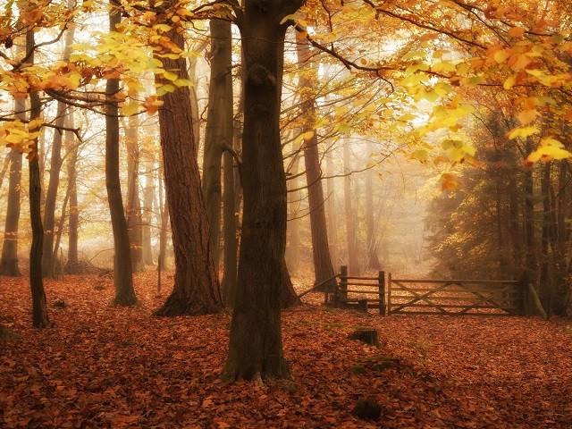 Какви са характерните черти на хората родени през ноември
