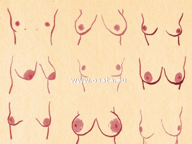 Характерът на жената според формата на гърдите