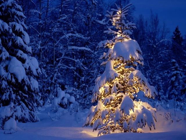 С какъв характер се отличават хората родени през декември